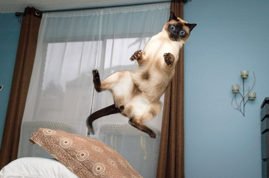 funny-cat-jumping-14-free-wallpaper-1