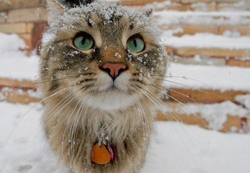 cat-cute-kitten-snow-winter-Favim.com-110233