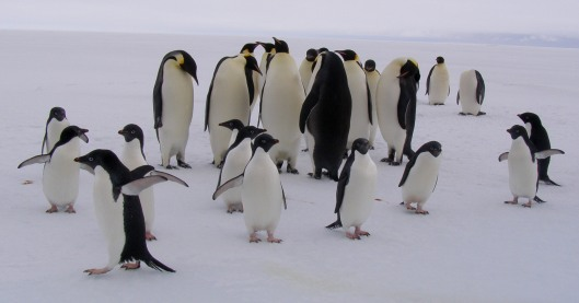 Penguin-party.jpg